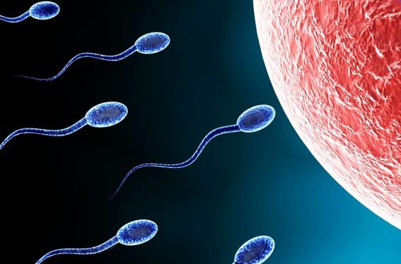 How long does sperm live